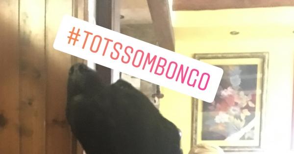 Ajuntament de Tossa de Mar: Bongo needs the sea water, help Bongo