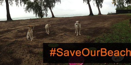 Minister of Environment: Stop the catching and killing of Mauritian beach dogs #SaveOurBeachDogs