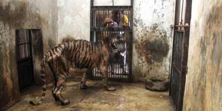 The Indonesian Government: Shut down Surabaya Zoo