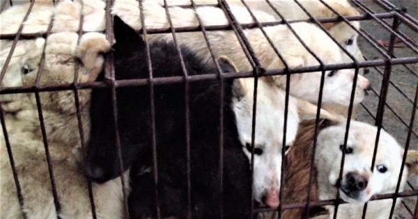 Gyeongsan, South Korea, Shut down the illegal dog farms!