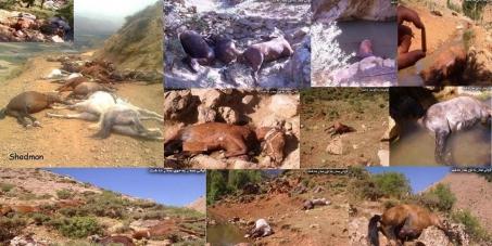 Iran, Department of environment (DOE)  : Stop killing the horses of smugglers in Kurdistan