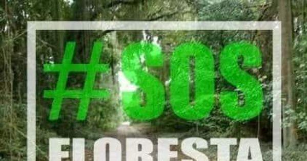 Pela preservação da Floresta do Camboatá! Que o autódromo seja em outro lugar.