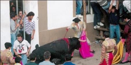 Assembleia da República e governo Português: Considerar os touros e cavalos como animais na lei Portuguesa