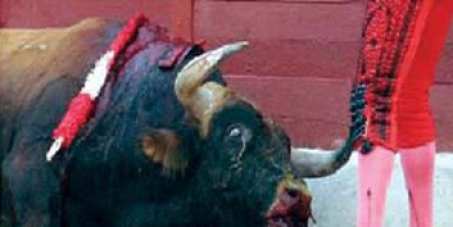 No subsidies for bullfights!