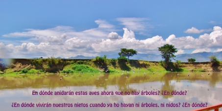 Restauración de las riberas del río Cauca en Colombia S. A.
