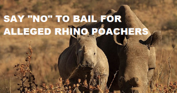 Deny bail to alleged Rhino poachers
