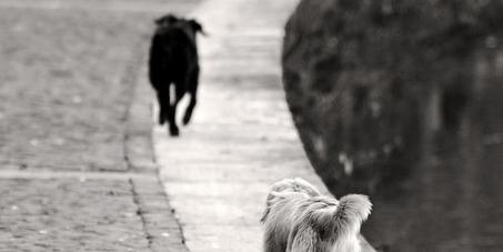 veterinario medico di base per tutti i cani di proprietà convenzionato asl medicine e operazioni convenzionati