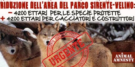 Vittoria! Salvi orsi e lupi, il Parco d'Abruzzo non si tocca!