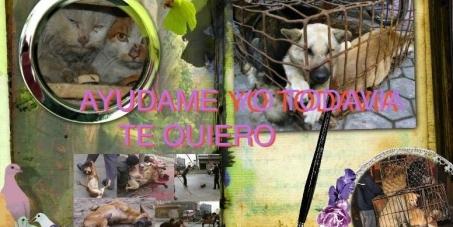 CLICK AQUI AHORA Firma la petición Detengan la masacre de TUS amigos Perros y Gatos en China