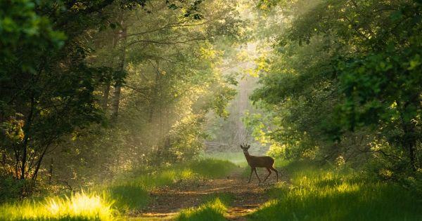 Teken voor meer natuur in Nederland