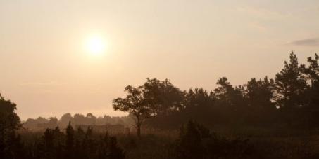 Rädda gotlands skyddade natur från kalkbrytning