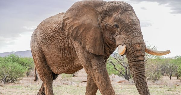 Let them be free: stop live elephant exports to China, ban trade in ivory permanently