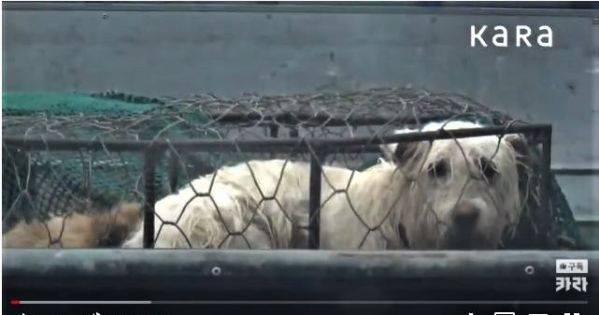 The South Korean Ministry of Food and Drug Safety must stop the illegal dog meat industry