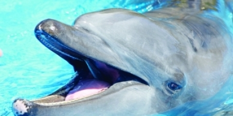 Retire wild caught dolphins Gambit and Frodo.  STOP captive breeding