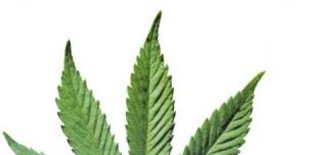 Liberalizziamo la Marijuana!