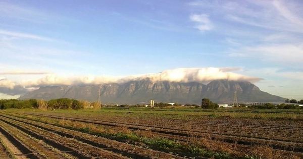 The Western Cape Premier and Mayor of Cape Town: STOP DESTROYING the Philippi Horticulture Area