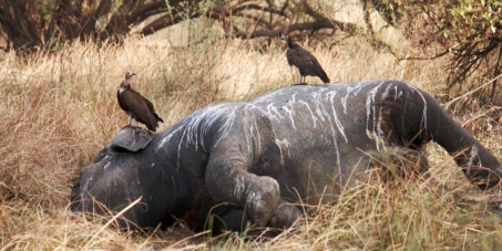 Die Zusammenarbeit von Staat und Anrainern im Pendjari-Nationalpark wird fortgesetzt.