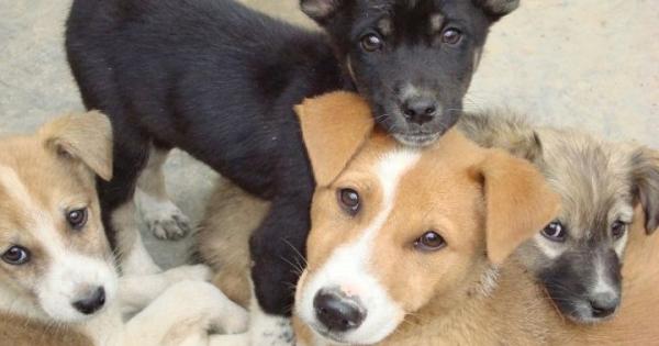 Ναι στις στειρώσεις από Ευρωπαίους εθελοντές κτηνιάτρους- Όχι στην ματαίωση τους