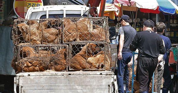 Daegu, South Korea, Shut down the illegal dog farms!