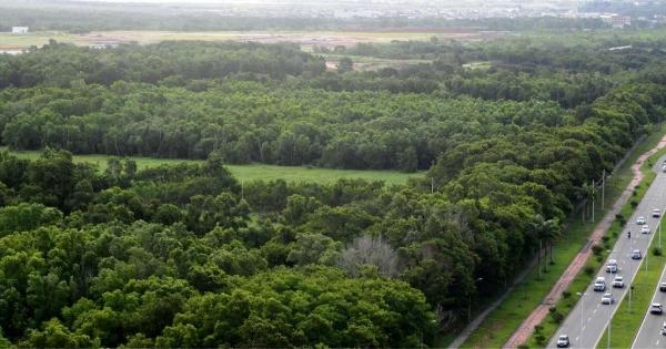 Não ao desmatamento da Área Verde às margens da Norte Sul e que a mesma seja transformada em área de uso público.