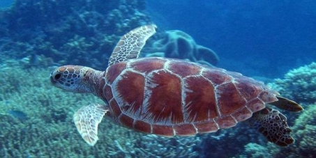 Save the Great Barrier Reef!