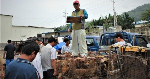 Naju, South Korea, Shut down the illegal dog farms!