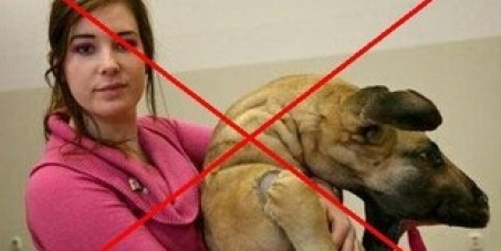 Stop Katinka Simonse from killing animals in the name of art