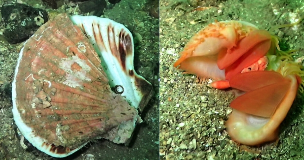 Nicola Sturgeon, First Minister, Scottish Government: Stop scallop dredging destroying Scotland's inshore sealife