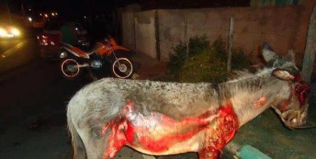justiça! o caso de crueldade com jeque na cidade de graccho cardoso em Sergipe