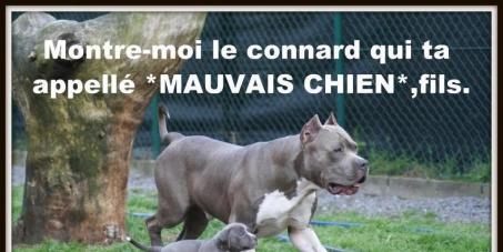 """Abrogation de la loi sur les chiens dits """"dangereux"""""""