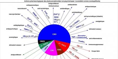 Aux Etats membres de la Commission des Stupéfiants des Nations Unies: - Sortir le cannabis du tableau des stupéfiants ; changer de politique