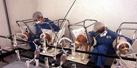 Stop your cruel and deadly experiments on animals!