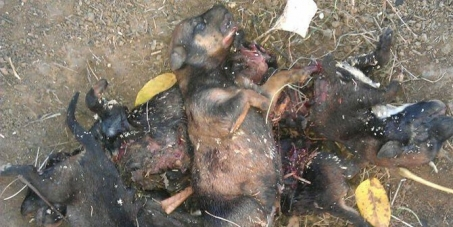 Demand action is taken against Children who tortured and murdered nine puppies
