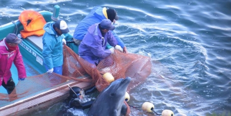 """City of Shrine / Broome Western Australia: Publicly and vocally renounce your """"sisterhood"""" with the City of Taiji, JP"""