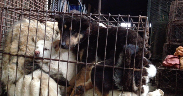 Warsaw, Poland, Tell Sister City, Seoul, Korea, That We're Opposed to the Torture of Dogs.