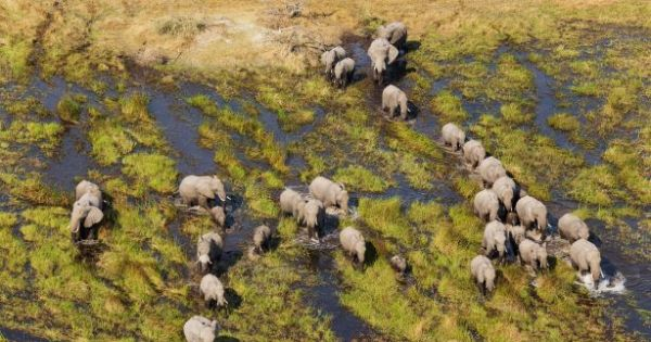 Let's protect the Okavango basin from the harmful effects of fracking and oil drilling.