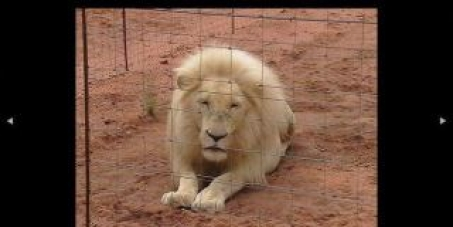 Stop Canned Hunting in South Africa.
