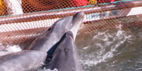 Caroline Kennedy: Continue to speak out to end the Taiji dolphin slaughter