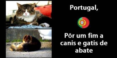 Portugal, Pôr um fim a canis e gatis de abate. Ajudar sim.