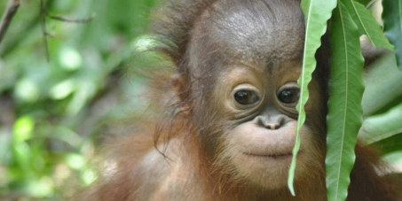 Woolies, please reconsider your palm oil policy!