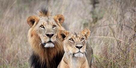 Kenya: Support for Higher poaching penalties.