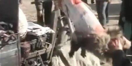Fermiamo il massacro dei cani scuoiati vivi