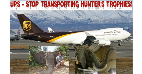 David P. Abney, CEO of UPS: Stop Transporting Hunter's Trophies!