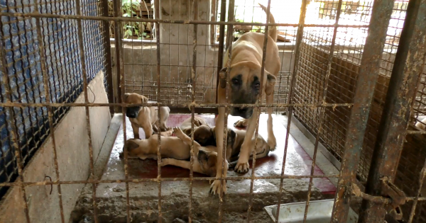 Cheongsong, South Korea, Shut down the illegal dog farms!