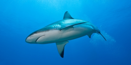 Canada, It's Time to Ban the Shark Fin Trade!