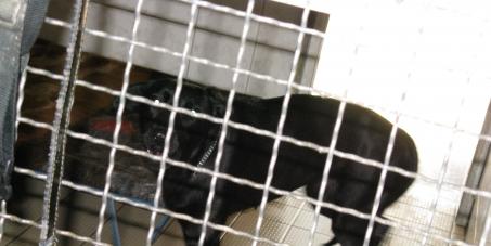 Sodomie?! Haftstrafen für Tierschänder!