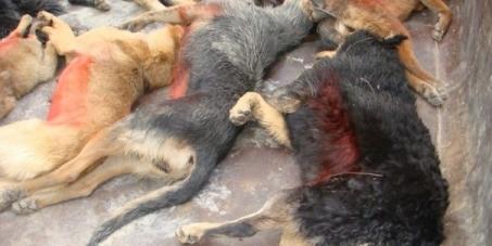 Бочаров Андрей Иванович  врио губернатора Волгоградской области: Остановить уничтожение бездомных животных в Волгограде!