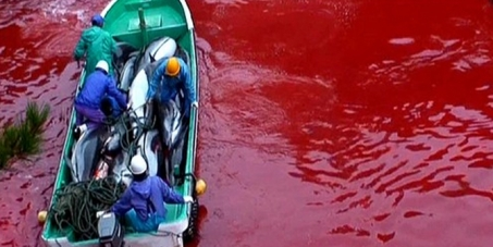 Tell WAZA to stop participating in Dolphin massacre at Taiji Japan