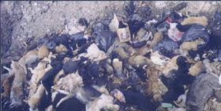 5 Millones de perros mueren en china al año , Firma para parar esto ¡Ya!