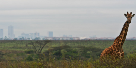 Save Nairobi National Park